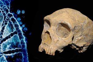 Neandertaler-DNA