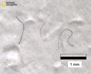 Mikroplastik-Fasern
