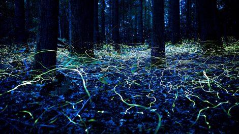 Avatar-Wald