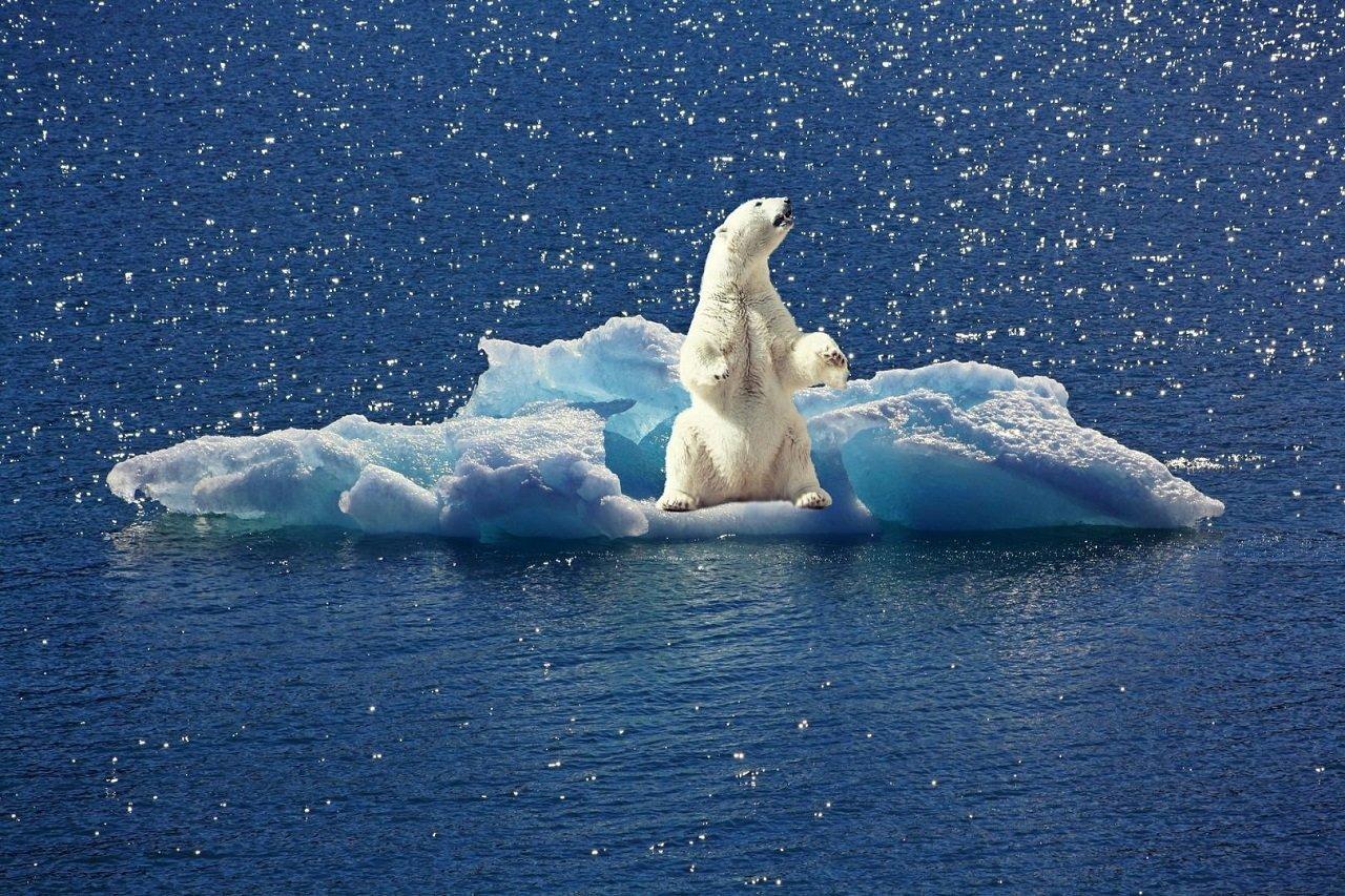 Eisbäre auf treibender Eisscholle