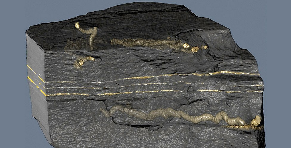 fossile Spuren