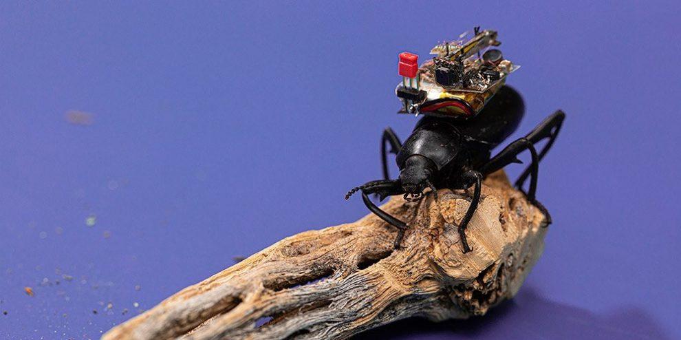 Insekten-GoPro