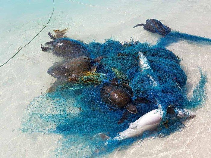 Gefangen im Fischernetz