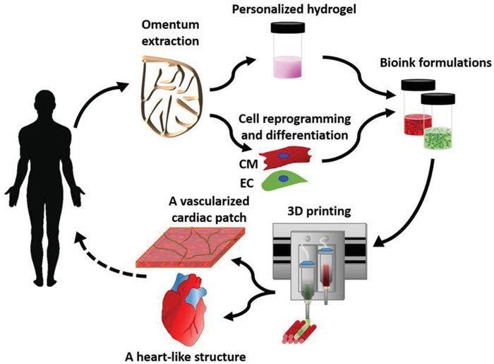 Herz aus dem 3D-Druck
