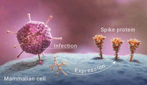 Impfprinzip