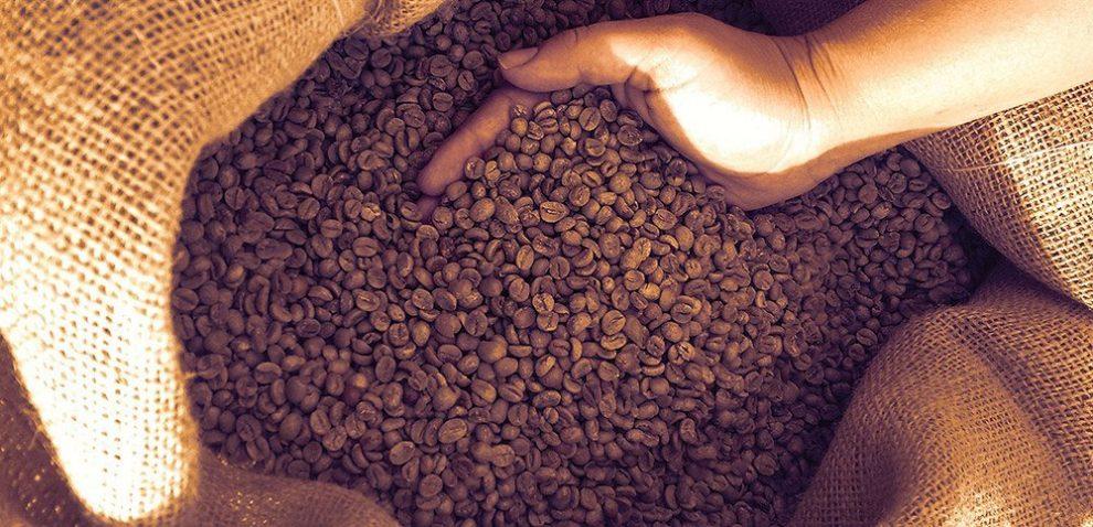 Ungeröstete Kaffeebohnen