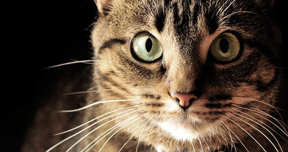 Sind Sie ein Katzenflüsterer?