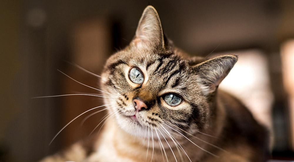 Schnelle Hilfe gegen Katzenhaar-Allergie