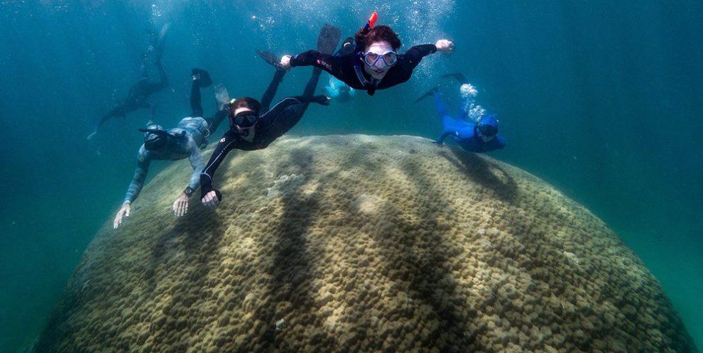 Korallen-Bommie