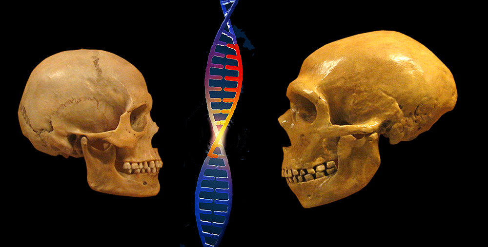 Homo sapiens: Einzigartig kreativ