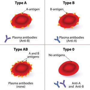AB0-Blutgruppe