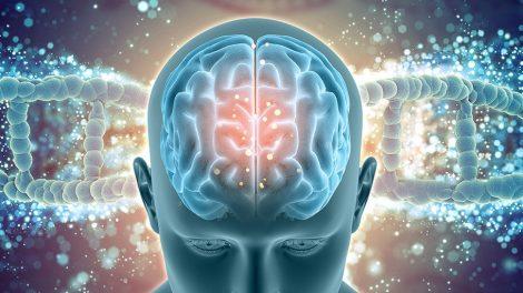 Gehirn und Gen
