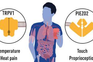 Hitze- und Berührungsrezeptoren