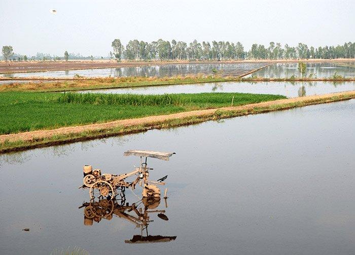 Reisanbau im Mekong-Delta