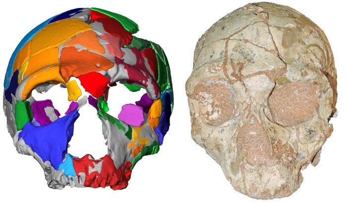 Fossil Apidima 2