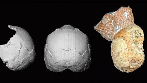 Fossil Apidima 1