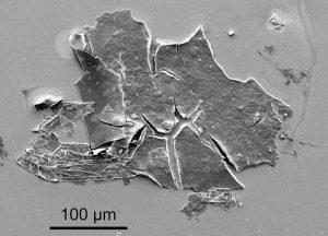 Nanogewebe SEM