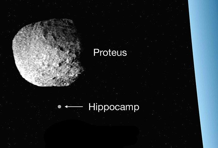 Hippocamp und Proteus