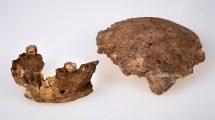 Nesher-Ramla-Fossilien