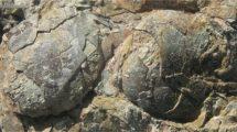 Urvogel-Eier