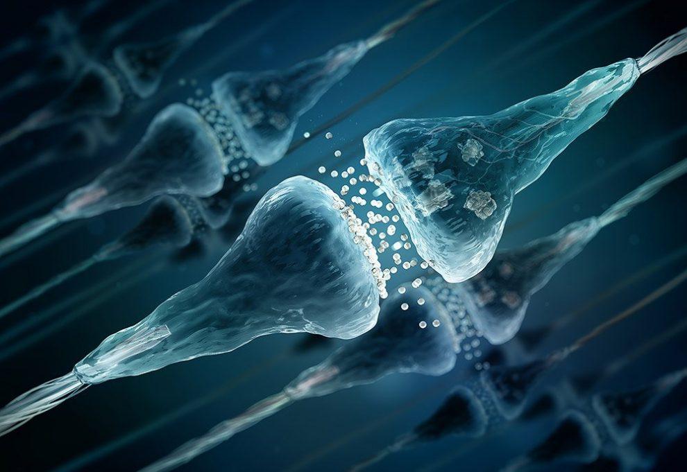 Synapsen