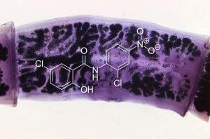 Niclosamid