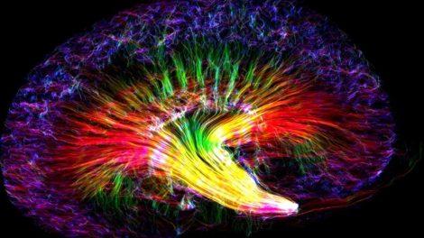 Nierenstruktur
