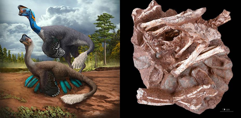 Dinosaurier und Nest