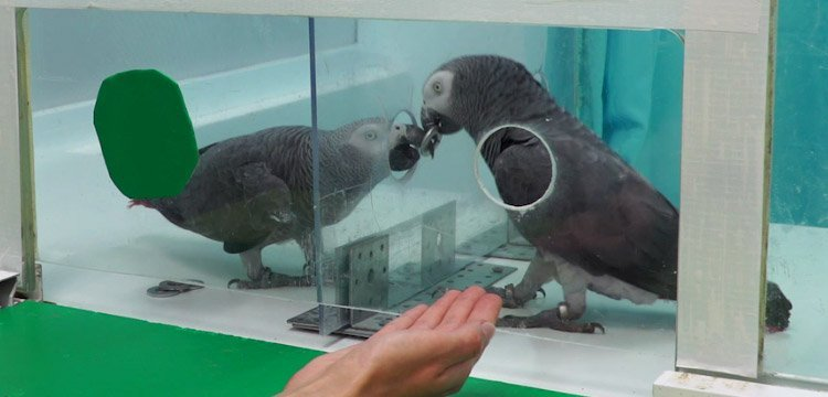 Hilfe unter Papageien