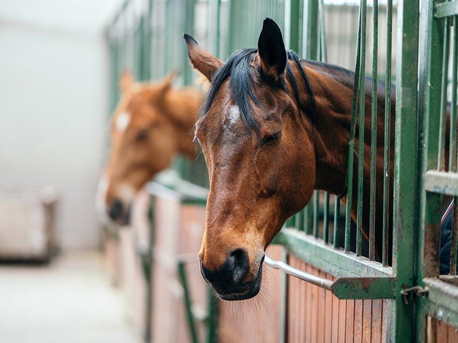 Pferde Tür