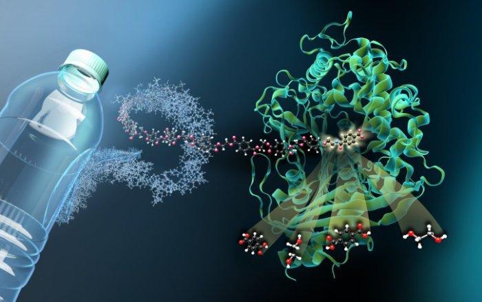 Plastikfressendes Bakterium