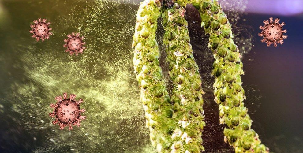 Pollen und Coronaviren