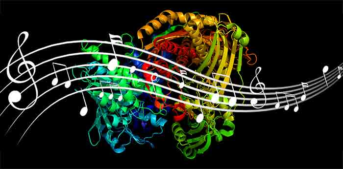 Proteinmusik