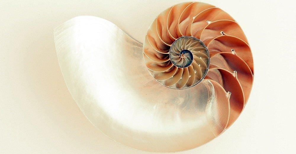 Aufgeschnittene Nautilusschale