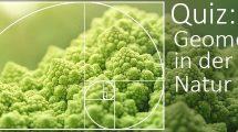 Romanesco (Brassica oleracea)
