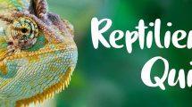 Teaserbild Reptilien-Quiz