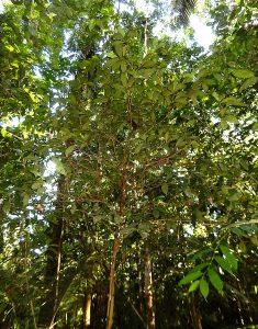 Rätselbaum 2