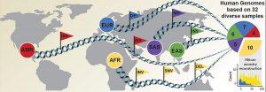 HErkunft der DNA-Proben