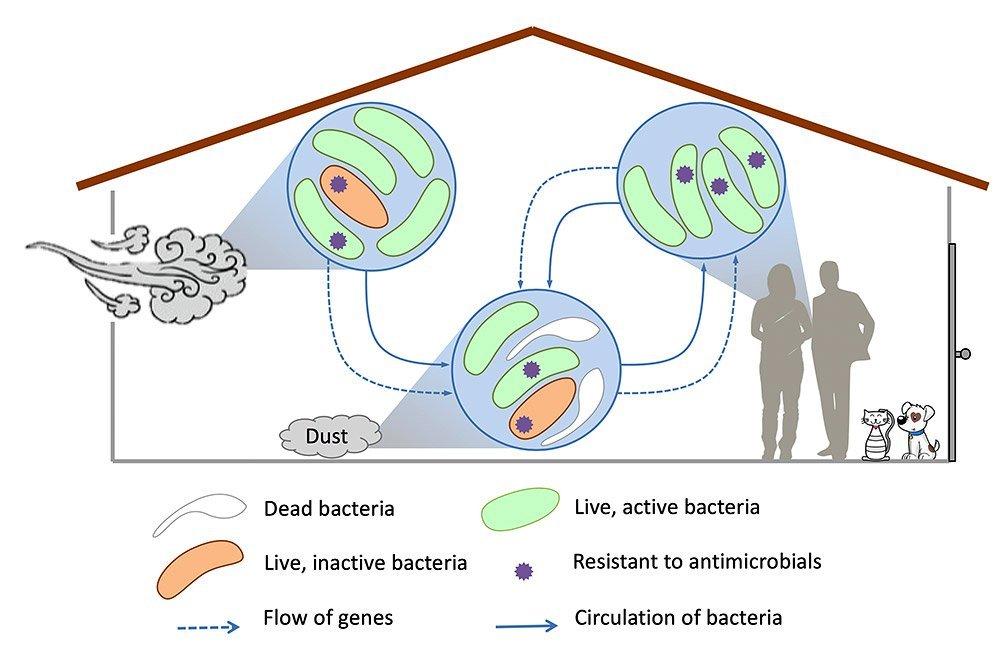 Mikroben im Hausstaub
