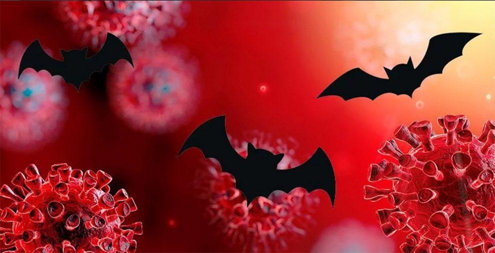 Fledermaus-Coronaviren