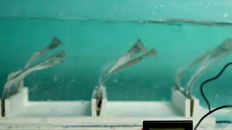Seegras-Wellengenerator