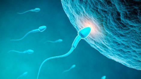 Spermien und Ei