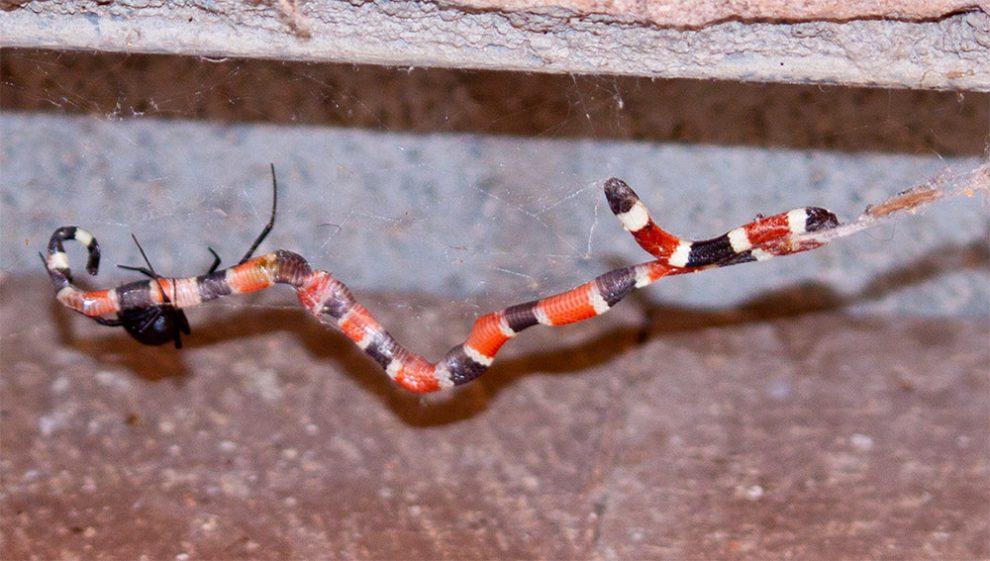 Spinne und Schlange