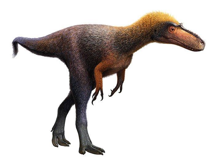 Mini-Tyrannosaurus