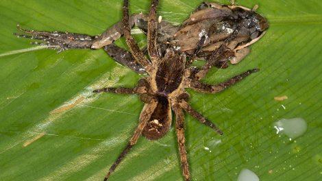 Spinne und Frosch