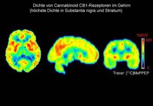 CB1-REzeptoren