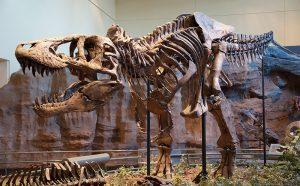 T.rex Holotyp
