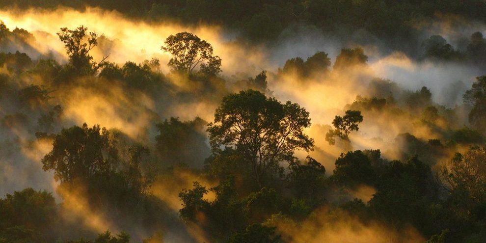 Amazonas-Regenwald
