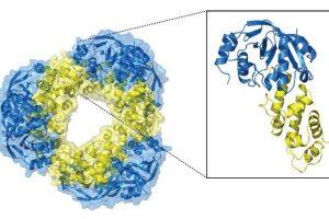 Toxin-Antitoxin-System Tuberkulose