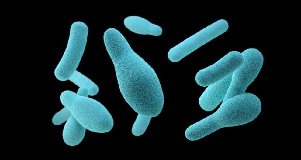 Clostridien